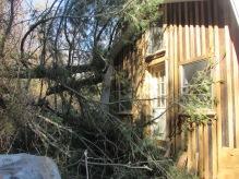 backdoor tree on barn