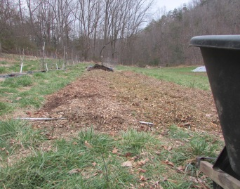 Blueberries mulch complete