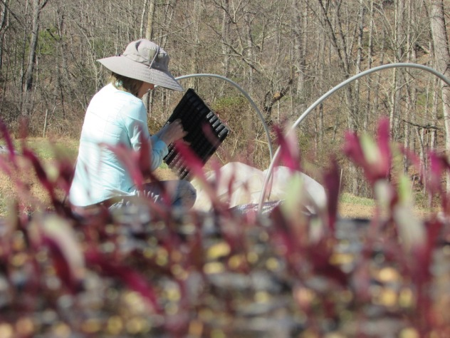 Planting through the beets 2