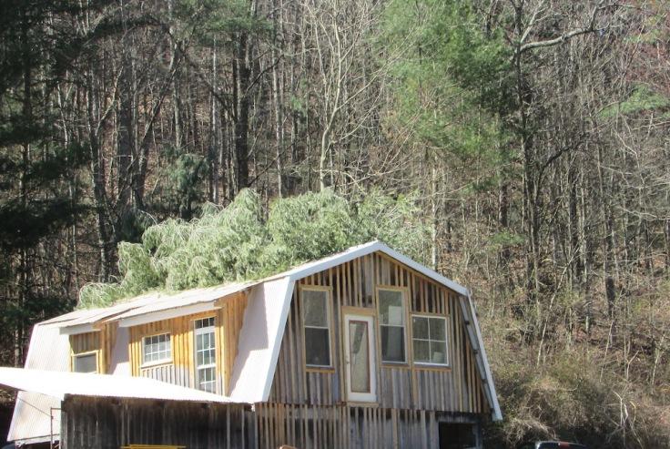 tree on barn